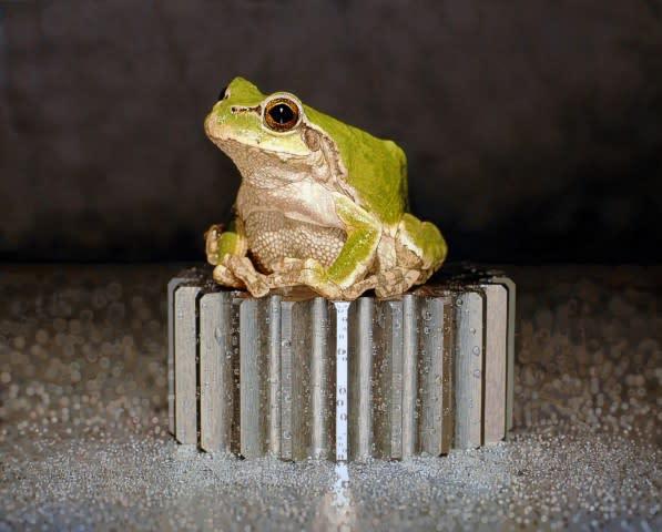 Young-Sung Kim frog