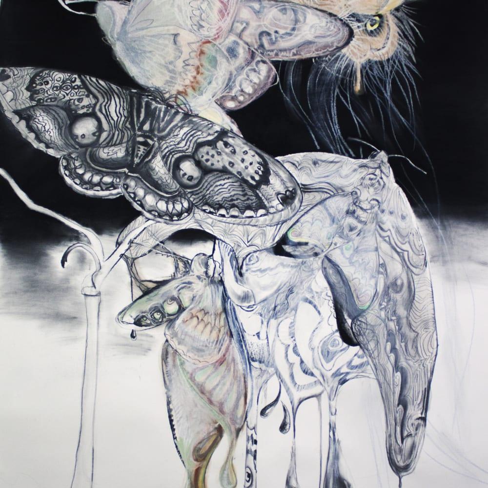 Sophie Steengracht, Nocturnal Pollination, 2019