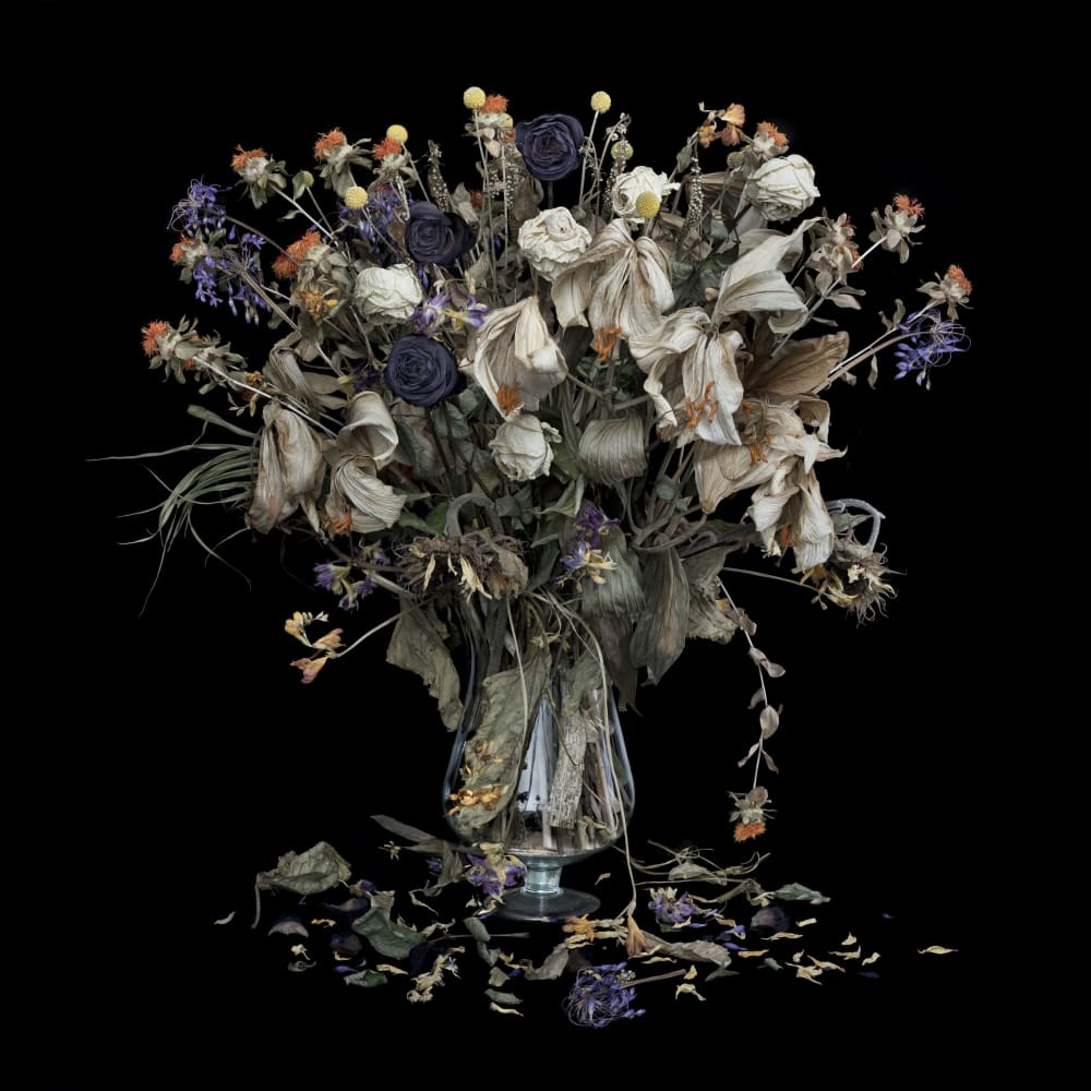 John Phillips  Vanitas XVII, 2015  Archival Inkjet Print  60 x 60 cm  23 5/8 x 23 5/8 in.  Edition of 100 plus 10 artist's proofs