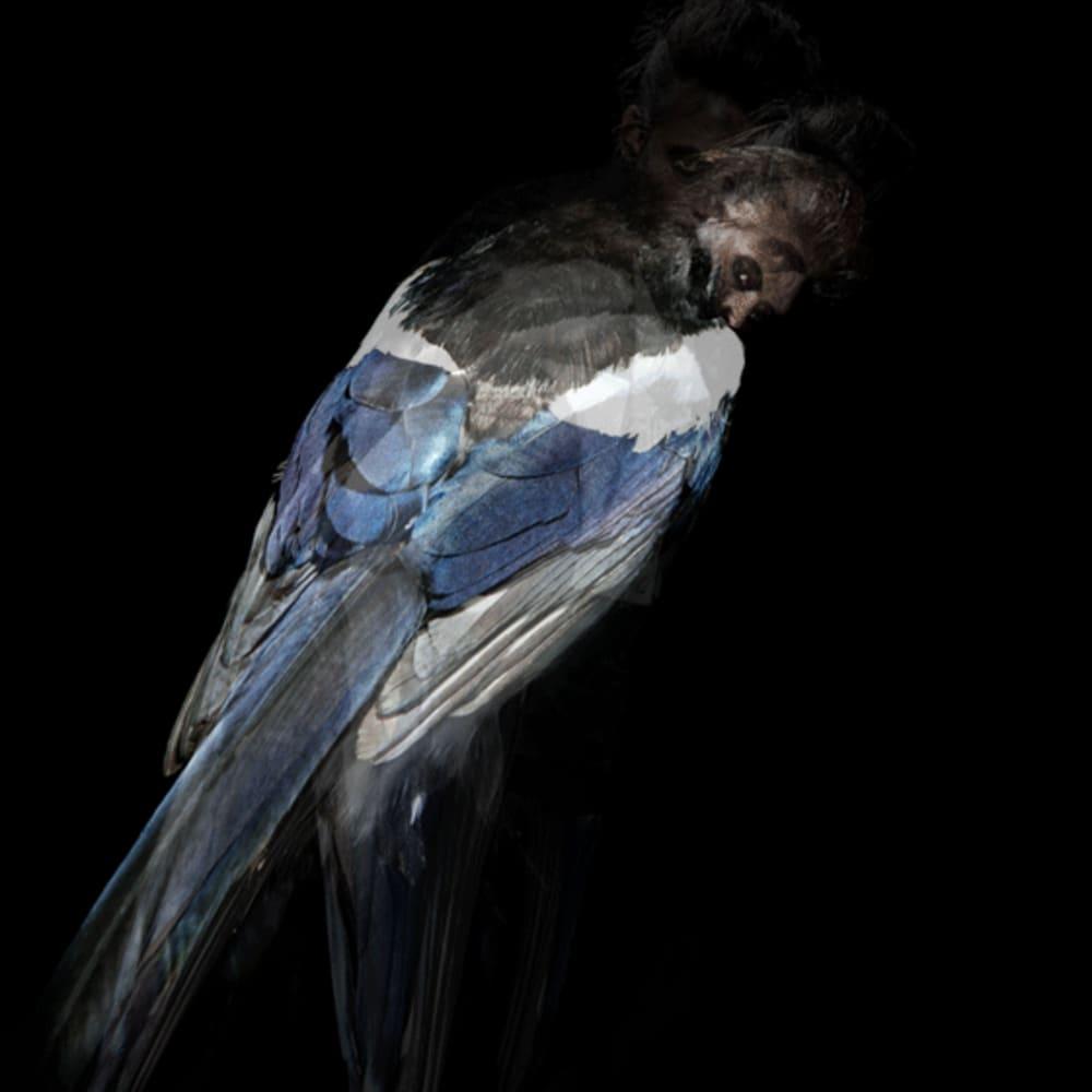 Derrick Santini, The Magpie, 2018