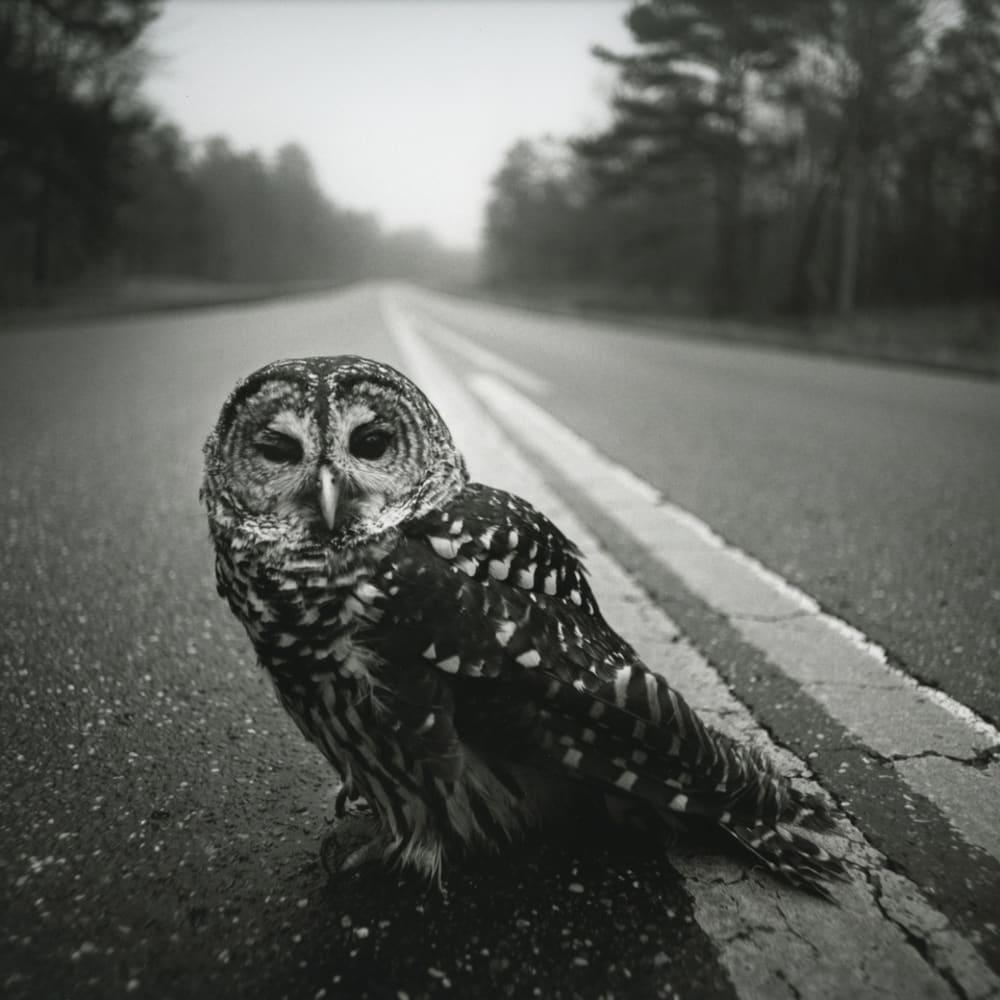 Arthur Tress, Owl on Road, Big Thicket, Texas, 1975