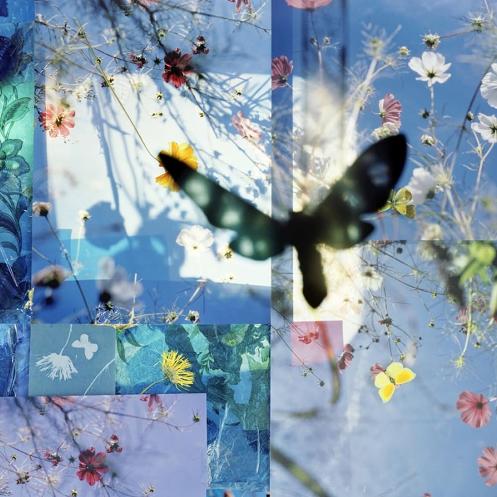 Thomas Zika  Butterflies - I saved an Admiral's life - 01, 2009/10  Lambdaprint mounted on aludibond with diasec-plexiglas  119 x 159 cm  Edition of 5