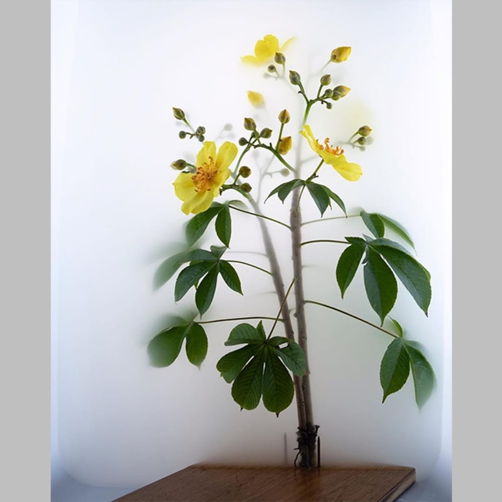 Wu Chi-Tsung