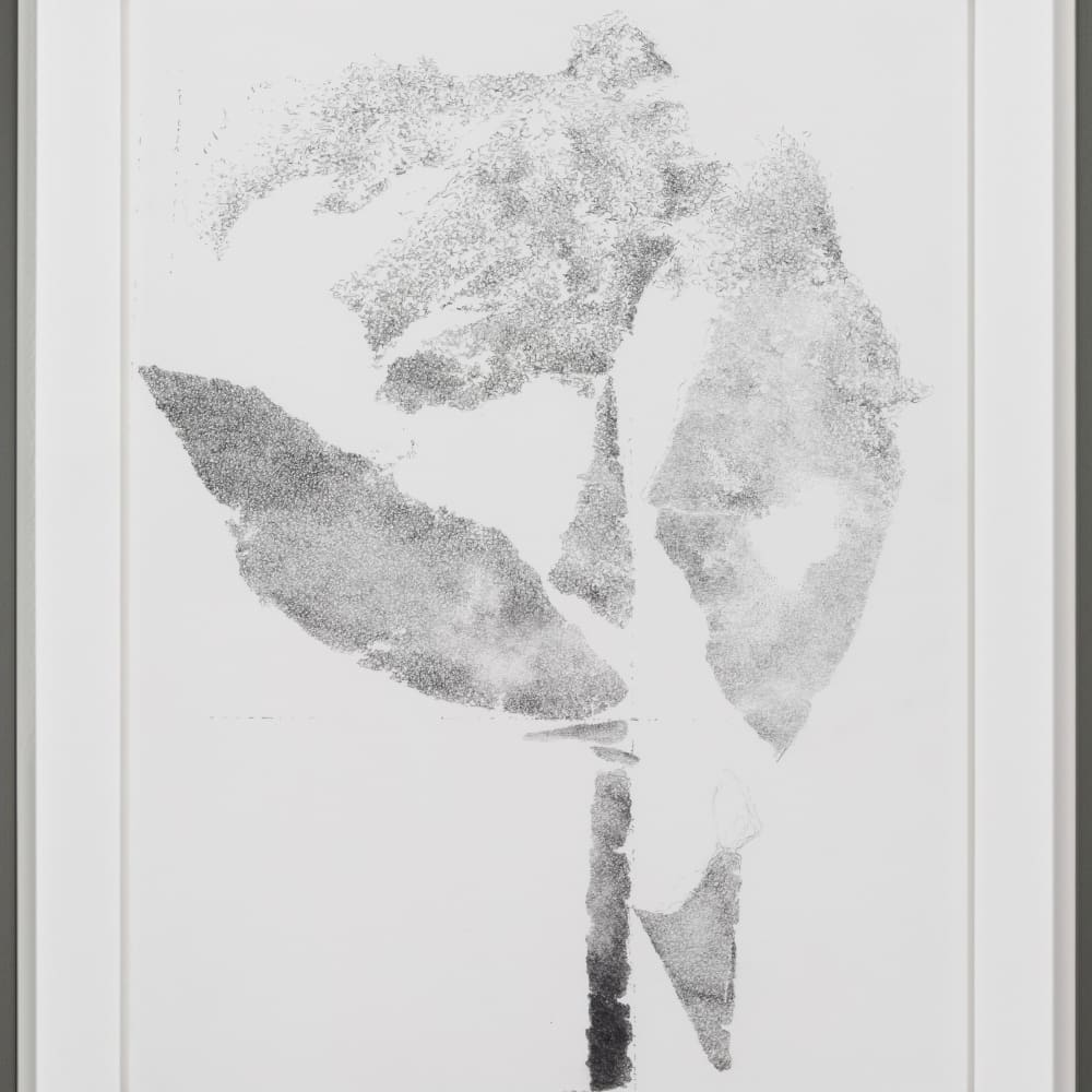Buzzing Clouds (A,T,K,R), 35.5 x 44.5 cm (45.5 x 60 cm framed), Pencil on paper 2018