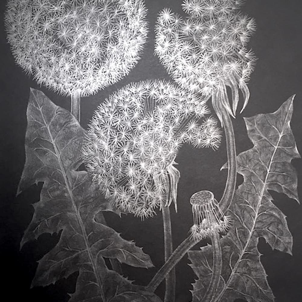 Three Dandelions with Bud, 2018