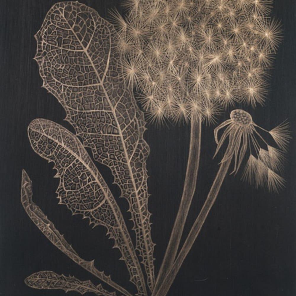 Dandelion with Full Leaf, 2019