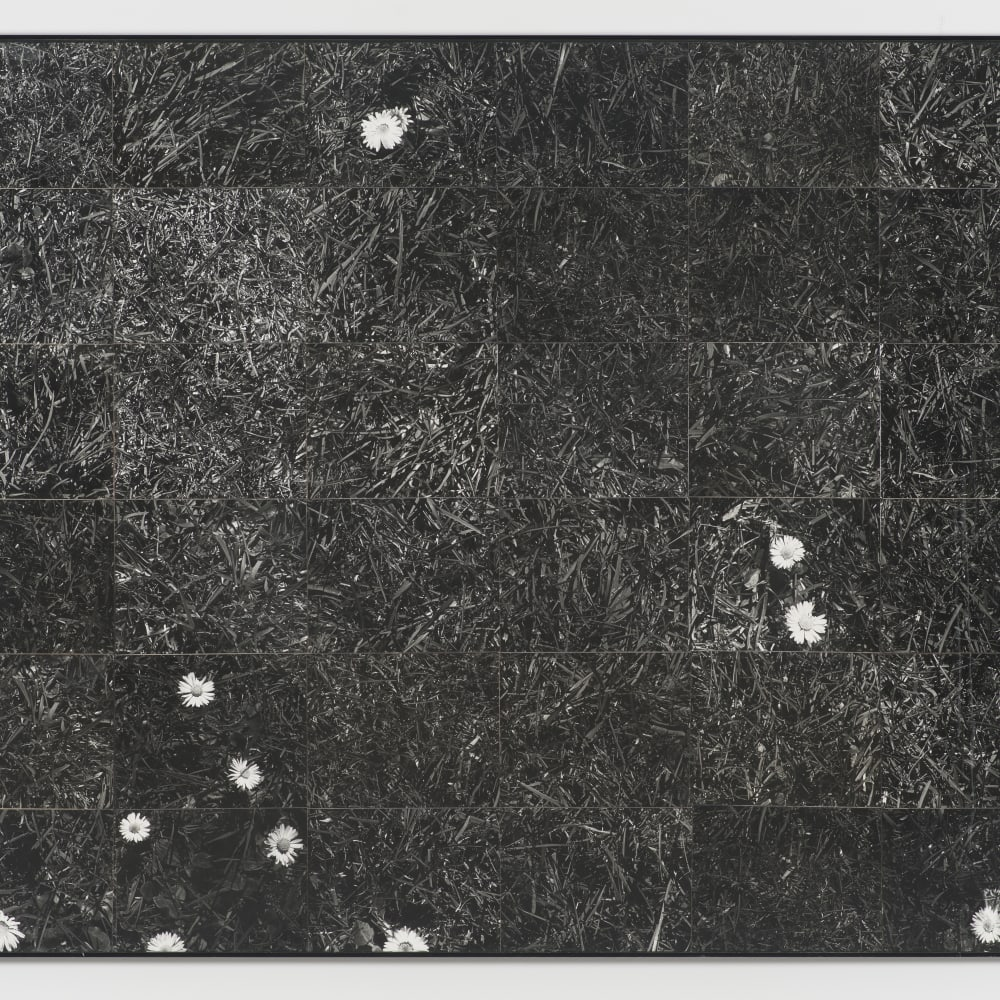 Lew Thomas, GRASS (1973). 36 gelatin silver prints, 47 1/4 x 59 3/4 inches. Image courtesy of the artist and Philip Martin Gallery, Los Angeles.