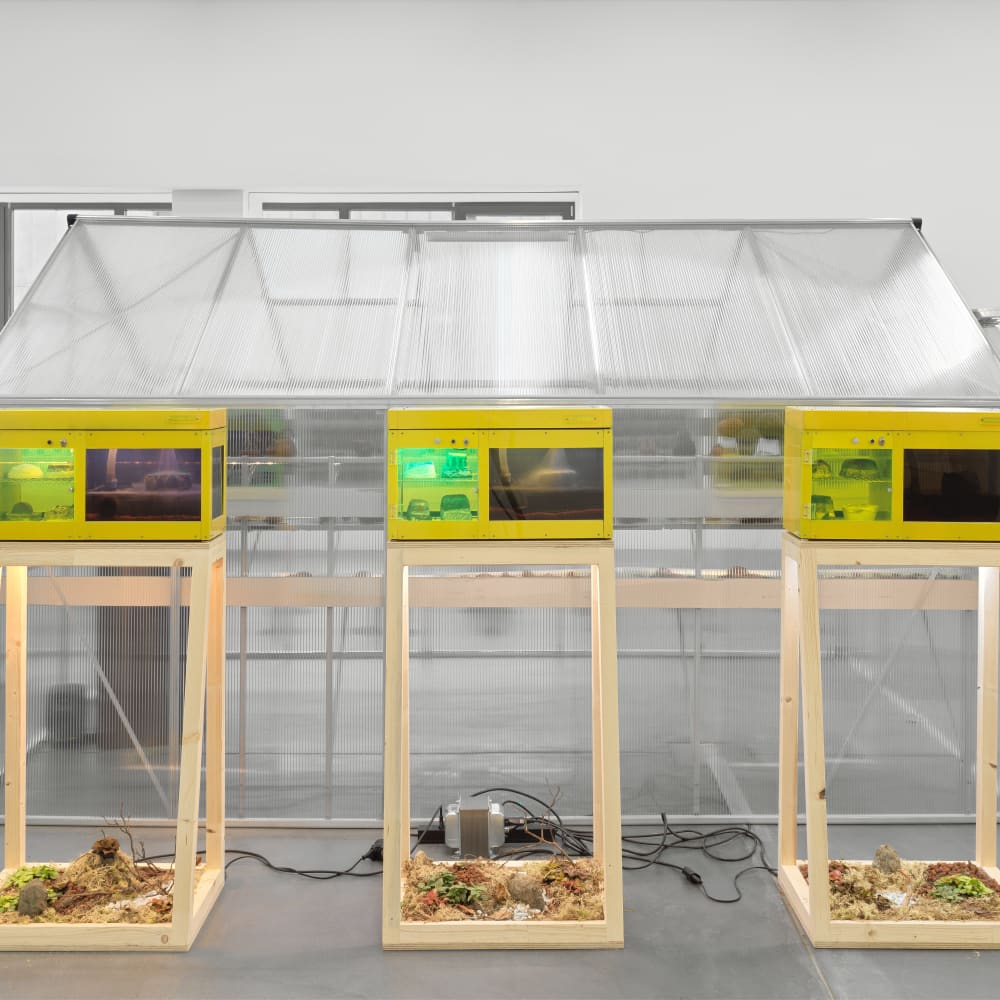 """""""Potential Worlds 2: Eco-Fictions,"""" (installation view) (2020). Image courtesy of Migros Museum für Gegenwartskunst. Photo: Stefan Altenburger."""
