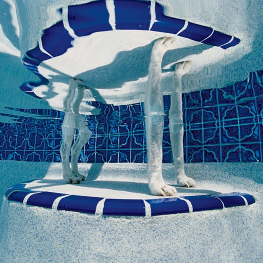 Alex Kirkbride  Bubba, Greg and Julie's pool, Crystal River, Florida