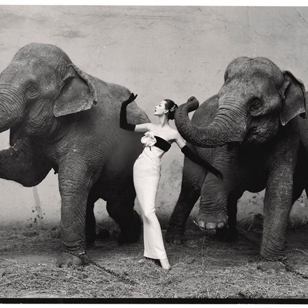 Today we are remembering the great American photographer Richard Avedon, who died on this day in 200...