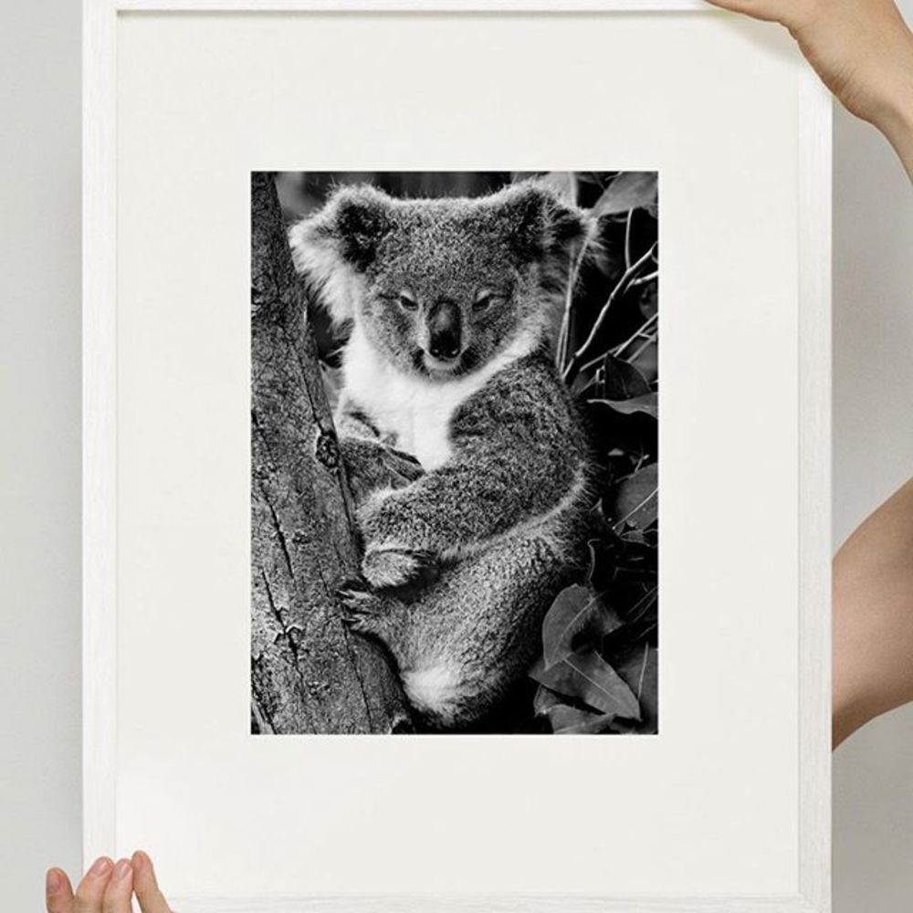 To support the rescue and protection efforts of the devastating fires in Australia, Mario Testino ha...