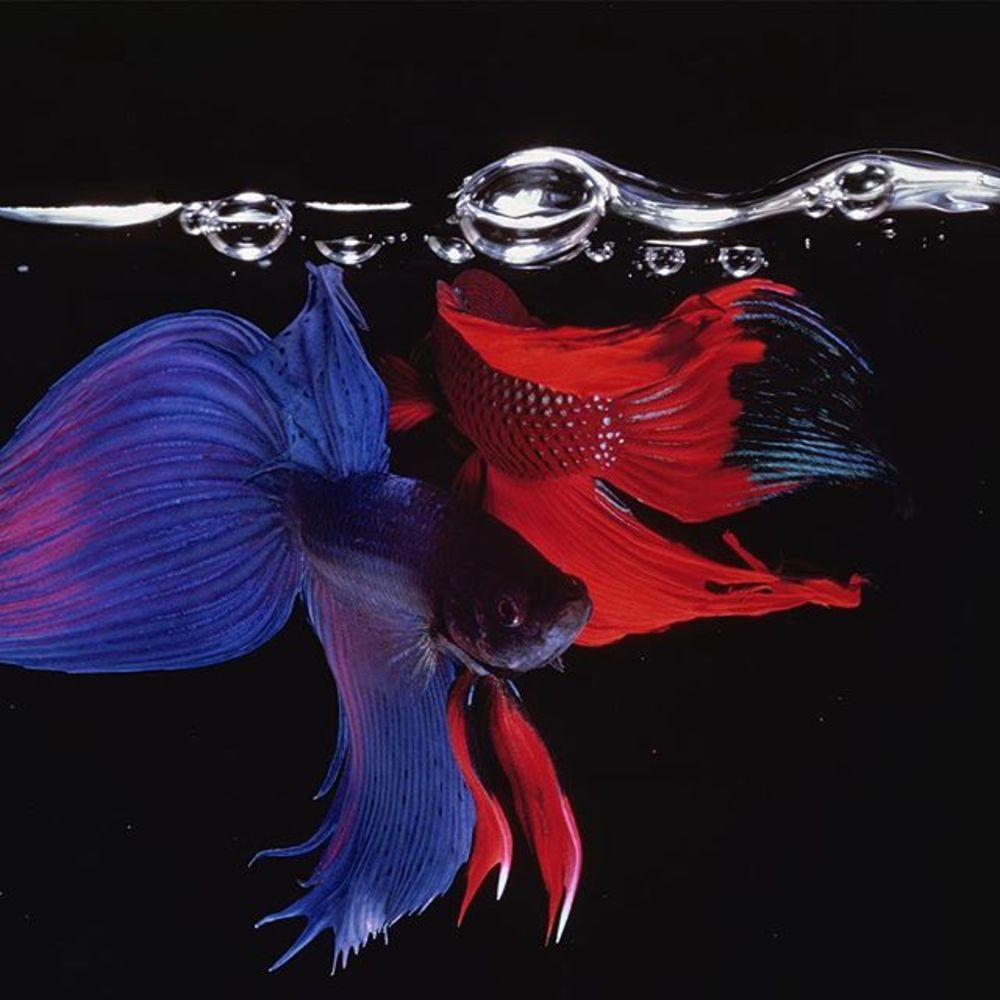 'Hiro: Fish & Fowl' opens tomorrow. This exhibition will be split into two parts, starting with 'Fig...