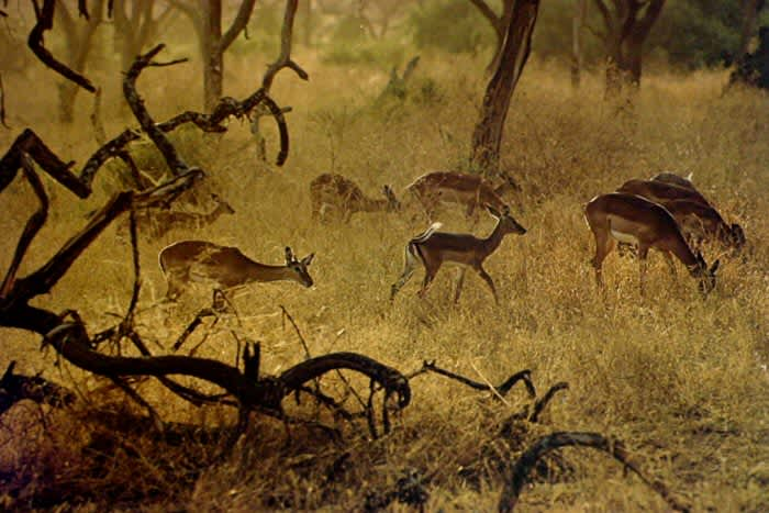 Ernst Haas, Kenya, From the Creation Portfolio published by Daniel Wolf Press in 1981, 1970
