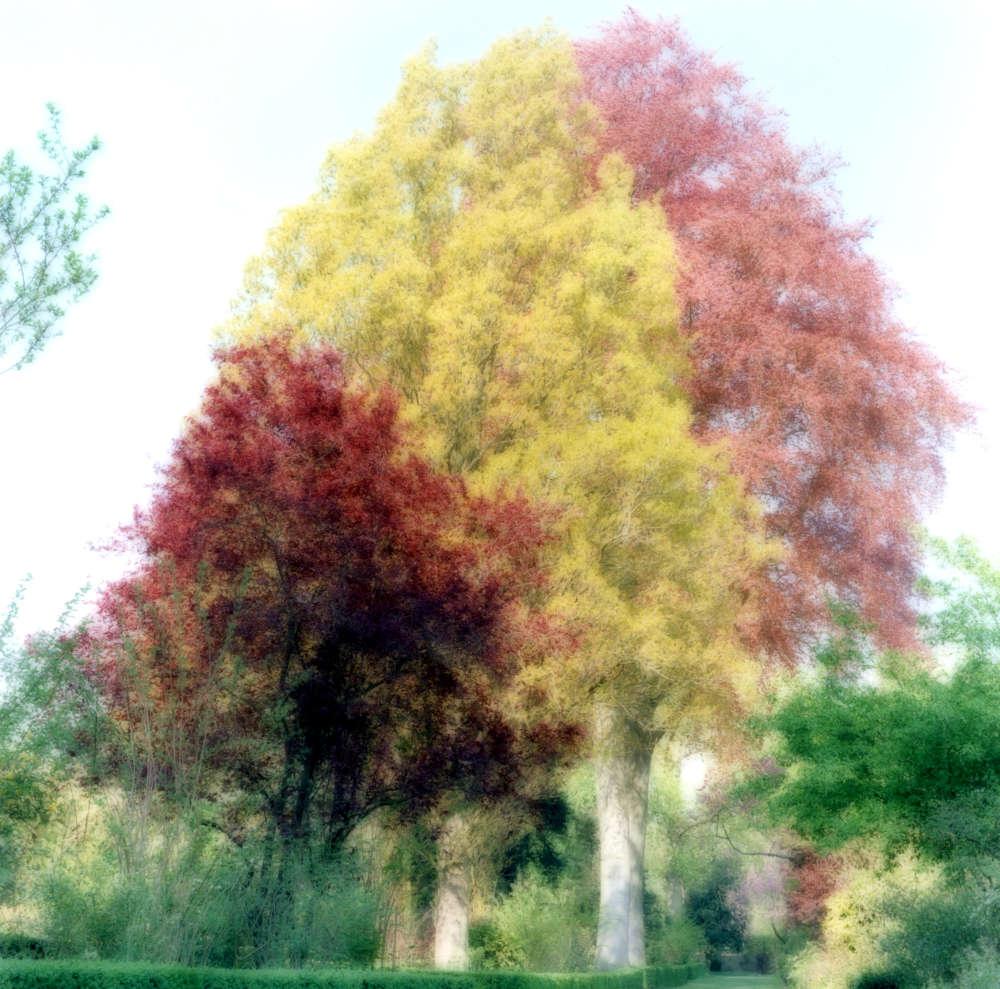 Lynn Geesaman, Versailles, France (4-07-24c-12), 2007