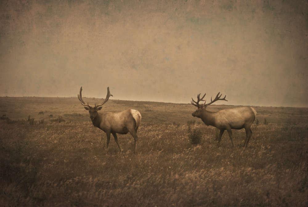 Jack Spencer, Elk, Point Reyes, California, 2014