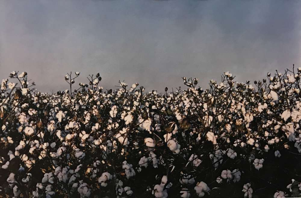 William Eggleston, Scott, Mississippi (view of cotton horizon), 1992
