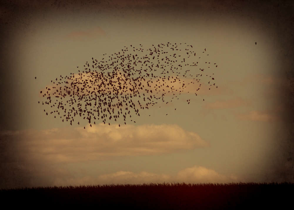 Jack Spencer, Birds, 22 Iowa, 2007