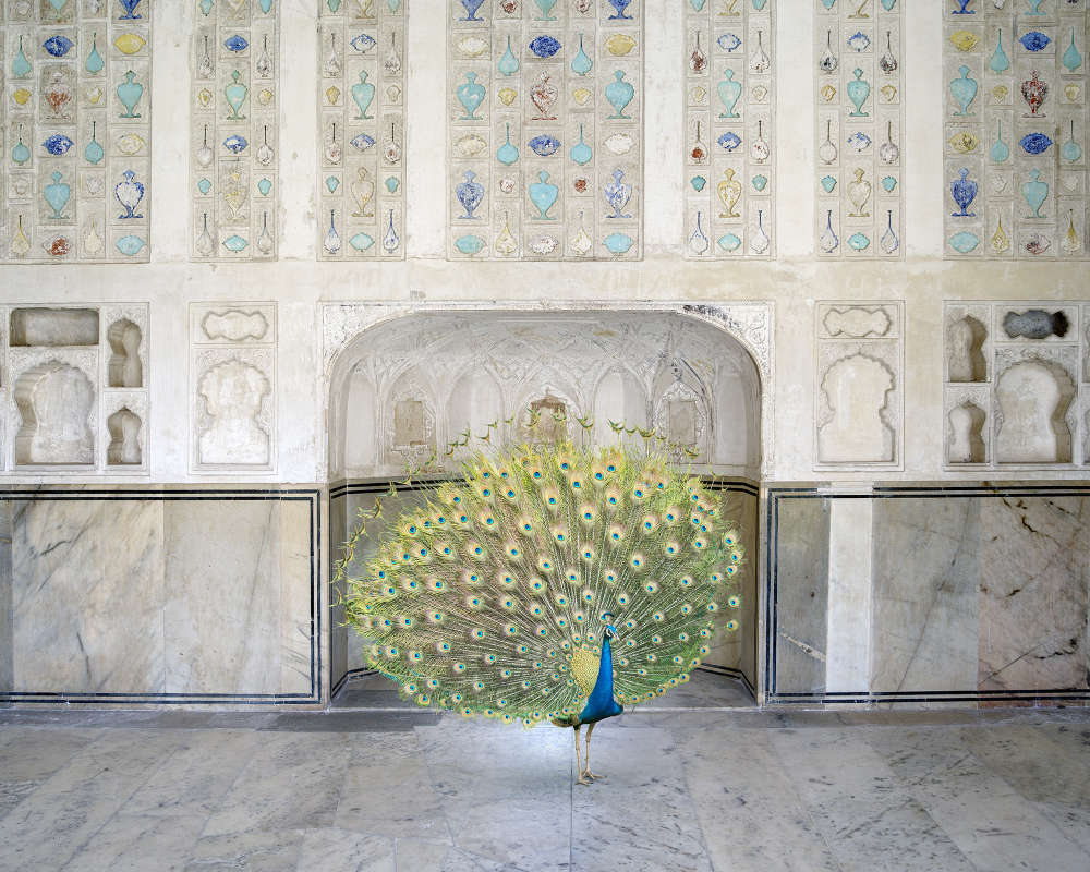 Karen Knorr, Master of Seduction, Amer Fort, Amer, 2017