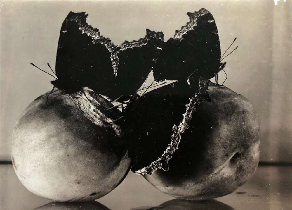 Margaret Bourke-White, Three butterflies and two peaches, 1939