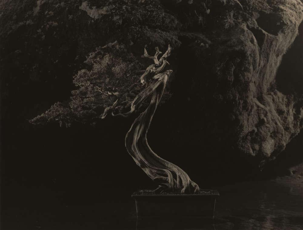 Yamamoto Masao, Bonsai #4041, 2019