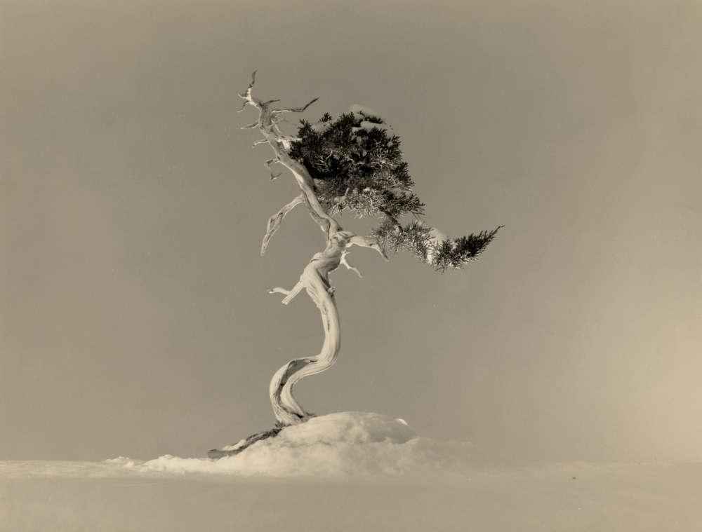 Yamamoto Masao, Bonsai #4035, 2019