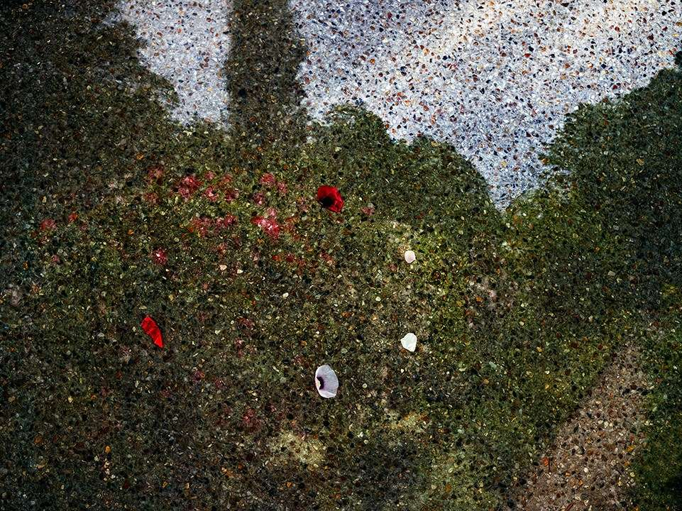 Abelardo Morell, Tent-Camera Image on Ground: View of Monet's Gardens with Flowers on the Ground, Giverny, France, 2015