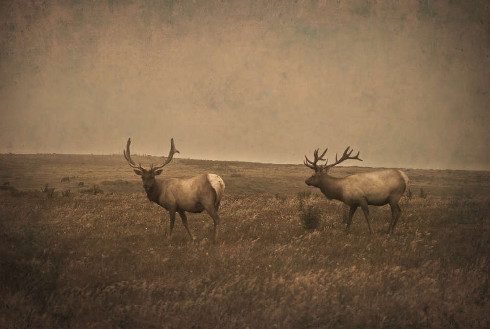 Jack Spencer, Elk, Point Reyes, California, 2014