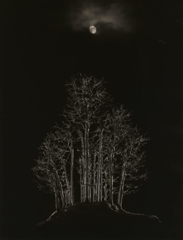 Masao Yamamoto, Bonsai #4003, 2018