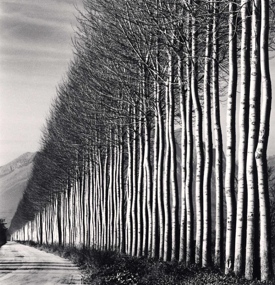 Michael Kenna, Poplar Trees, Fucino, Abruzzo, Italy, 2016