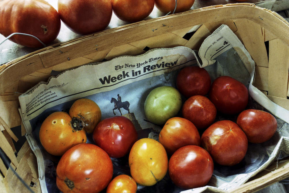 Langdon Clay, New York Times Week in Review with Ripening Tomatoes, 2003