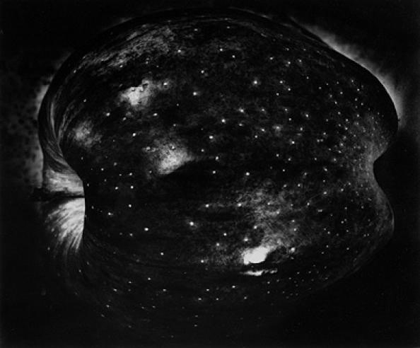 Paul Caponigro, Apple, New York City, 1964