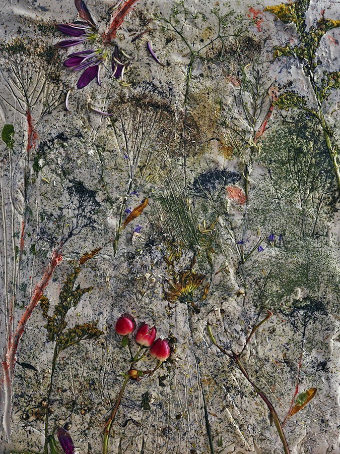 Abelardo Morell, Flowers for Lisa #4, 2016