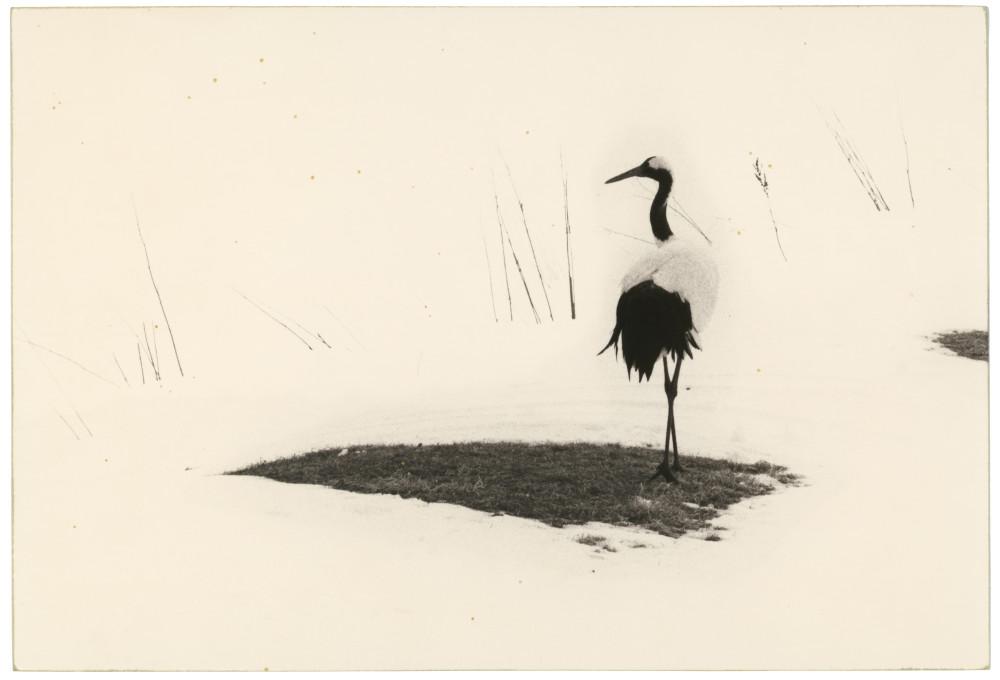 Masao Yamamoto, Kawa=Flow #1655