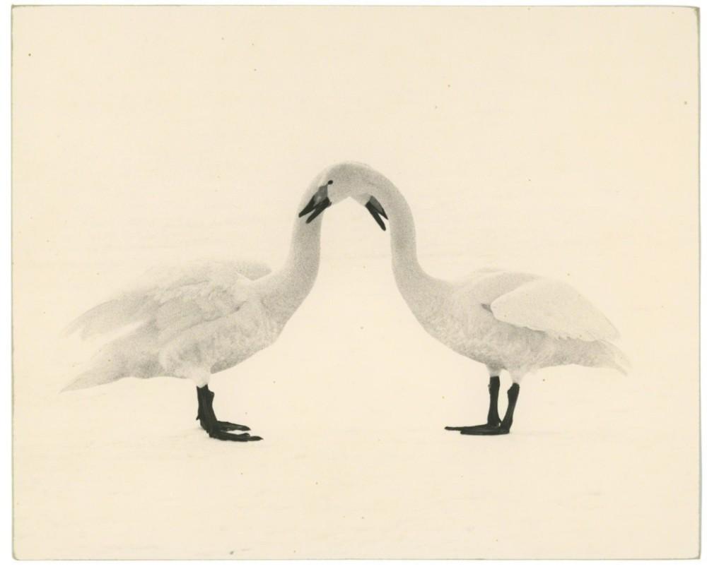 Masao Yamamoto, Kawa=Flow #1658