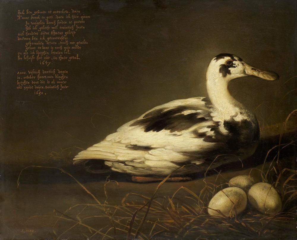 Sijchten Duck