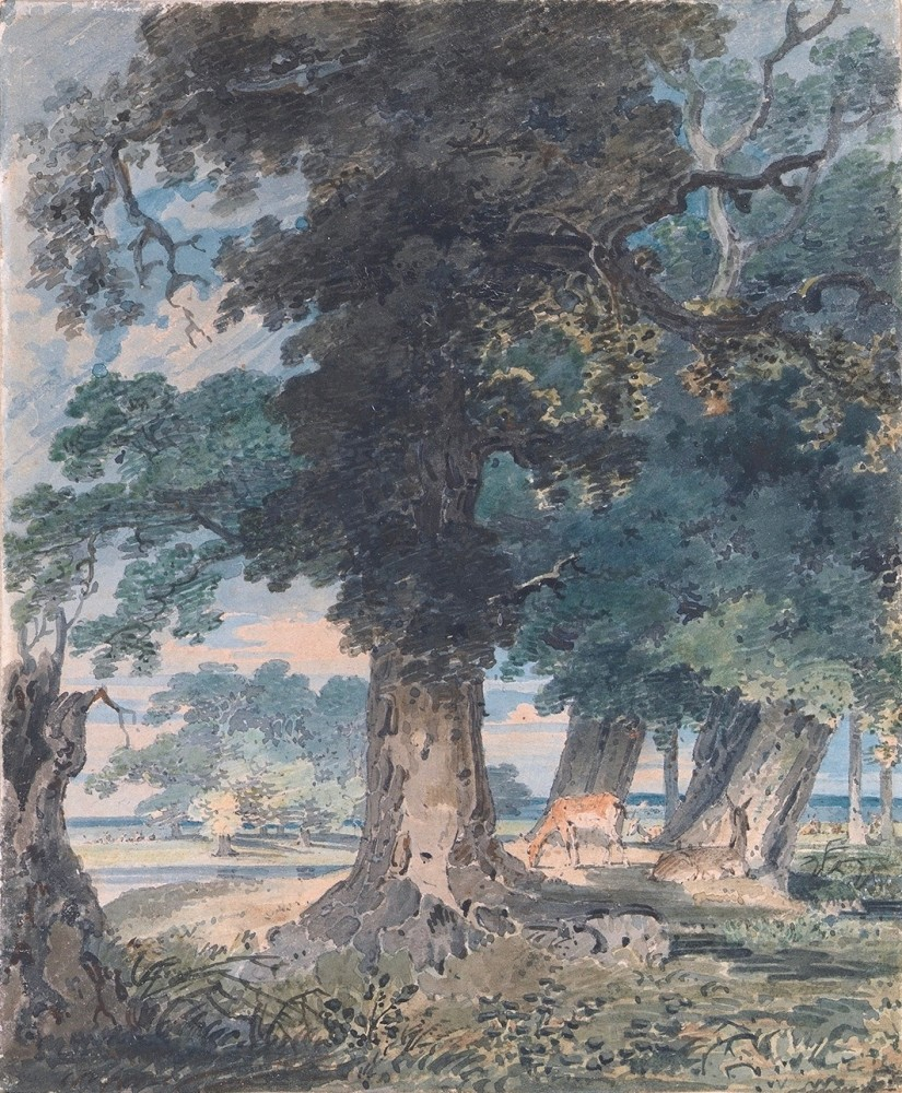 Deer in the Windsor Forest
