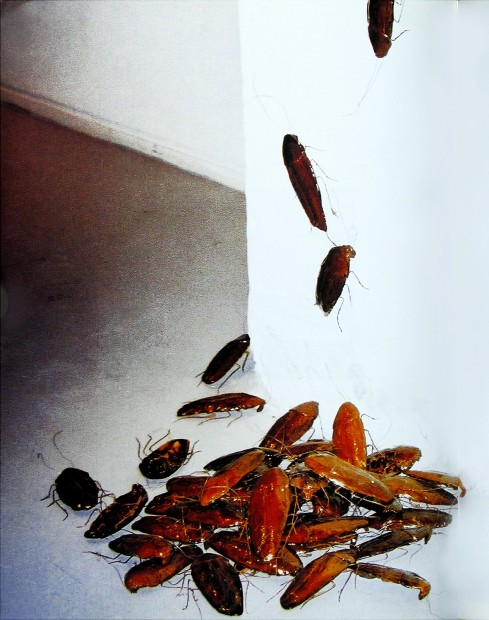 <em>Bita Fayyazi Cockroaches installation of 2000 ceramics each 15cm in length at Nikolaj Contemporary Art Center Copenhagen, 1998</em>