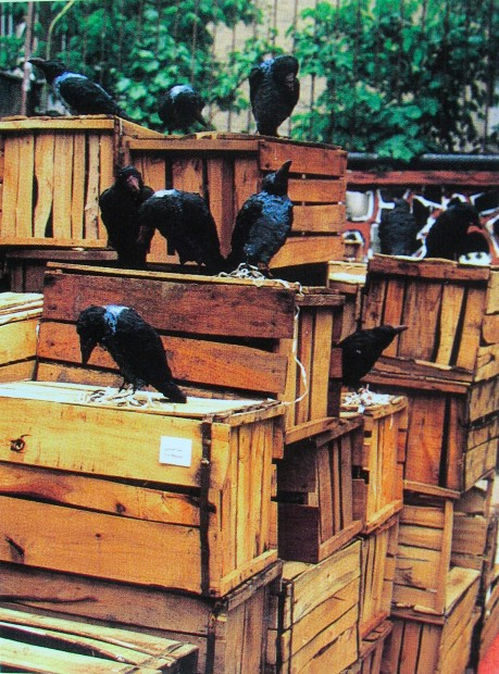 <em>Bita Fayyazi Crows Experiment 98 An Exhibition of Ephemeral Art Tehran ,Iran, 1998</em>