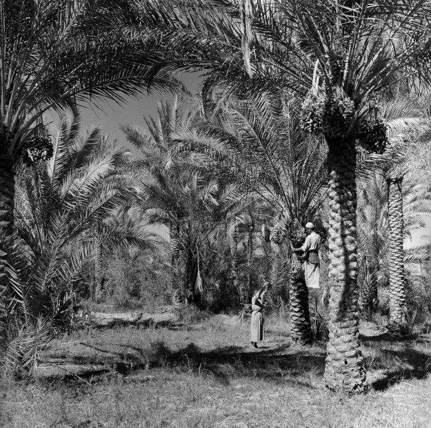 "<span class=""title"">Palm orchards, Jadriya, Baghdad, 1970<span class=""title_comma"">, </span></span><span class=""year"">2019</span>"