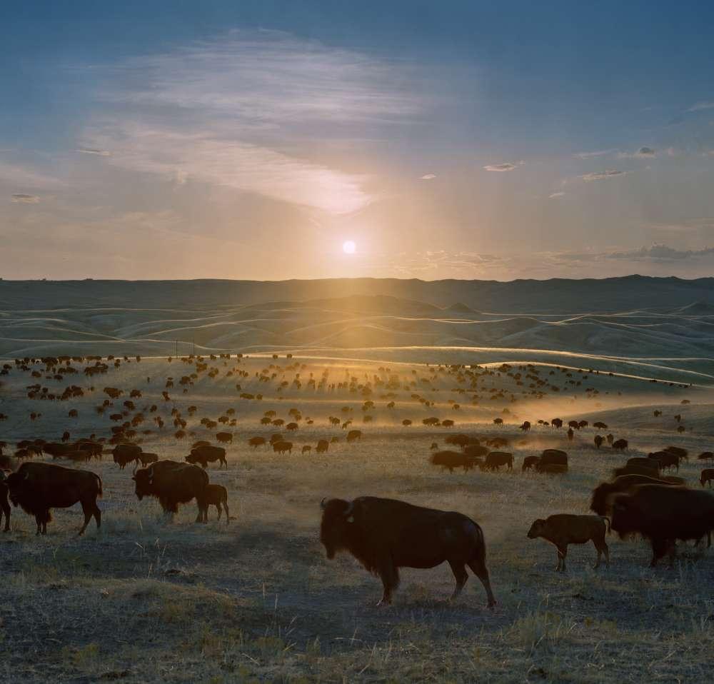 Andrew Moore, Flying H Buffalo Ranch, Walworth County, South Dakota, 2006 - Artwork 27137