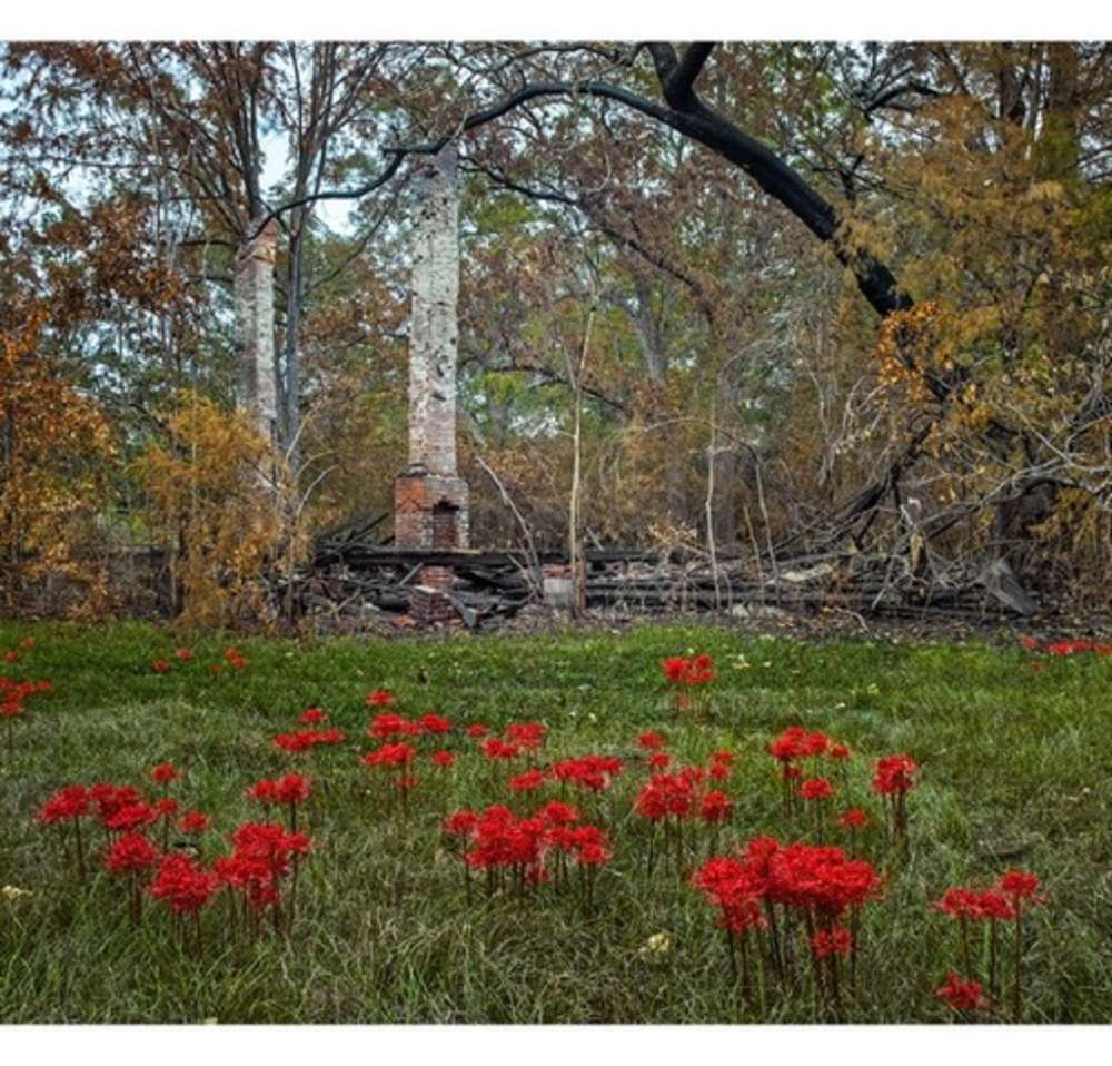 Andrew Moore, Chimney and Spider Lillies, Newbern AL, 2015 - Artwork 32254
