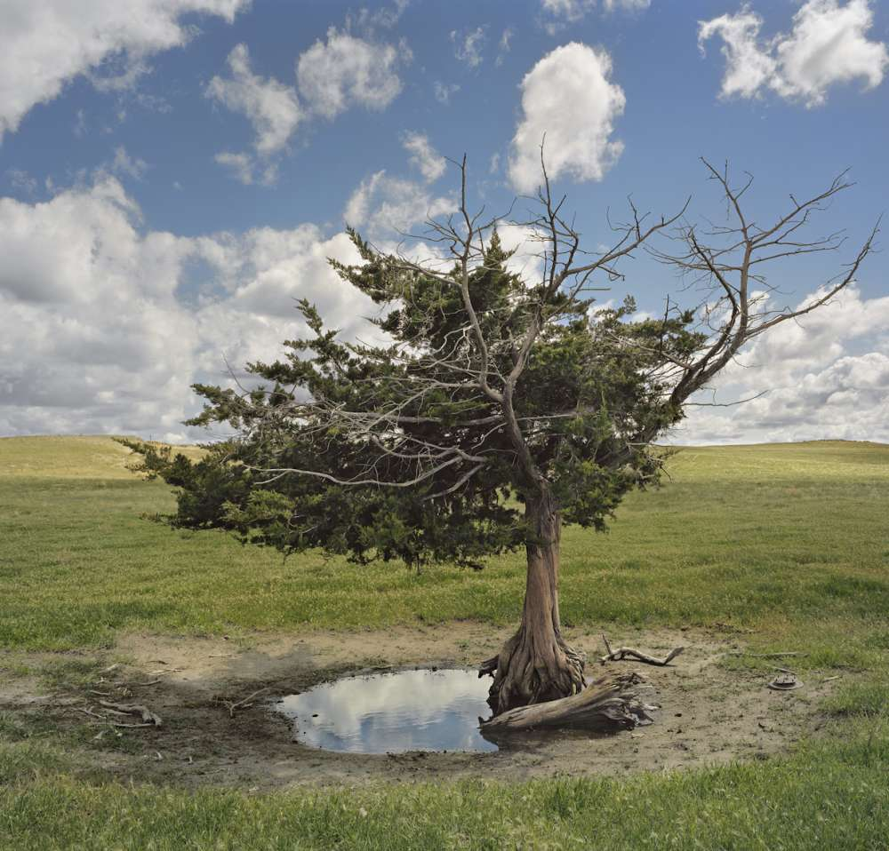 Andrew Moore, Homesteaders Tree, Cherry County, Nebraska, 2011 - Artwork 27117