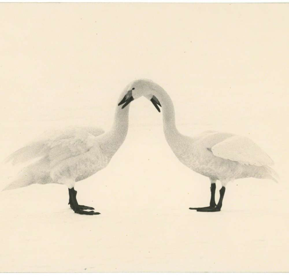 Yamamoto Masao - Kawa=Flow #1658
