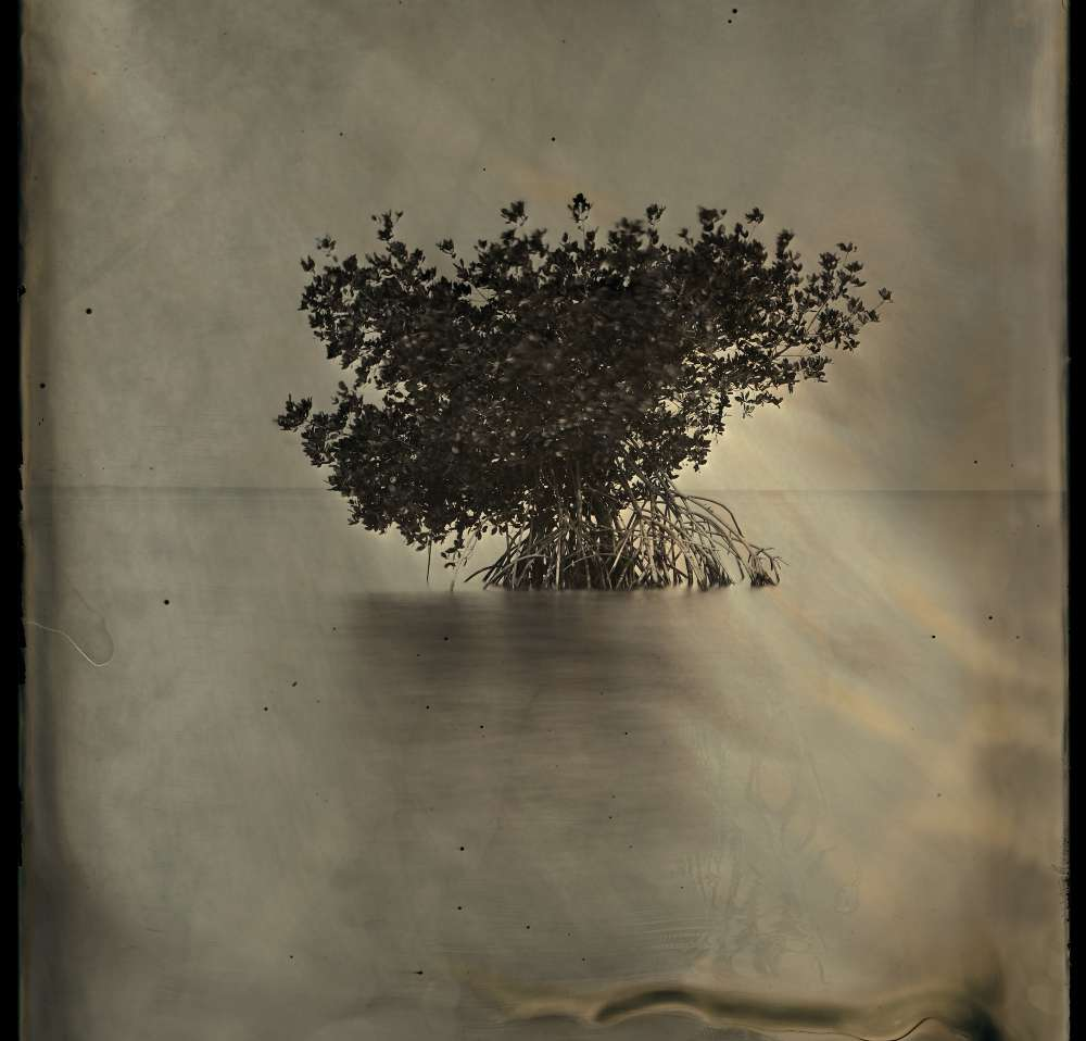 Charlie McCullers & Cecilia Montalvo - Barrier Island, Study no. 327
