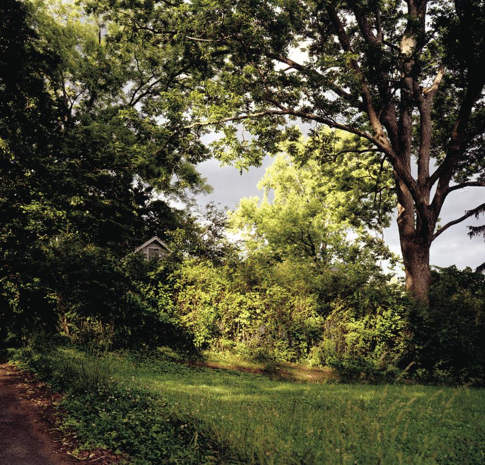 Angela West - Familiar Landscape #1