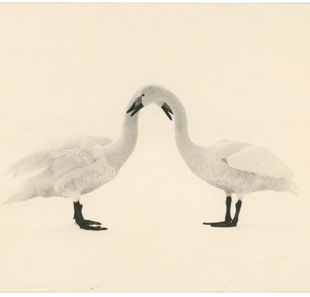 Masao Yamamoto - Kawa=Flow #1658