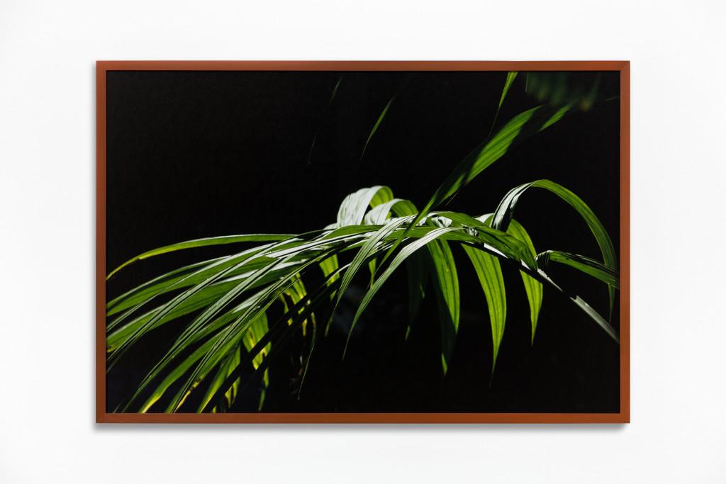 Daniel Steegmann Mangrané, Fog Dog (Palm Leaves), 2020