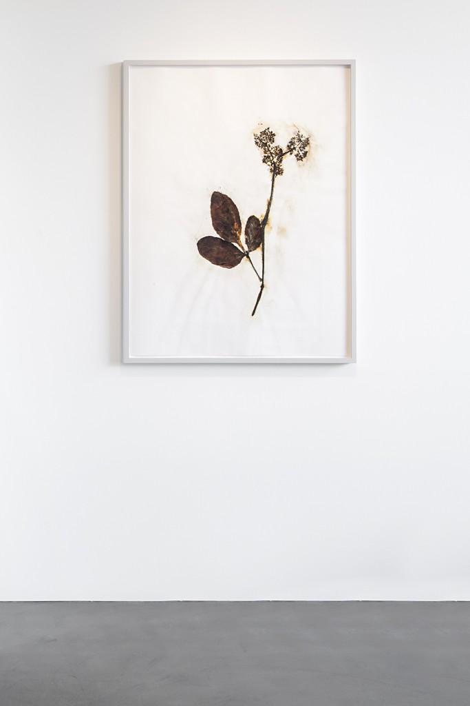 Herbarium Amazonas - Sheets (2)