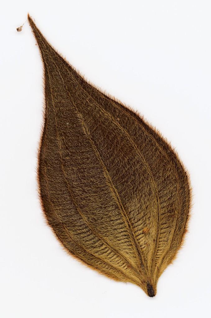 Herbarium Amazonas