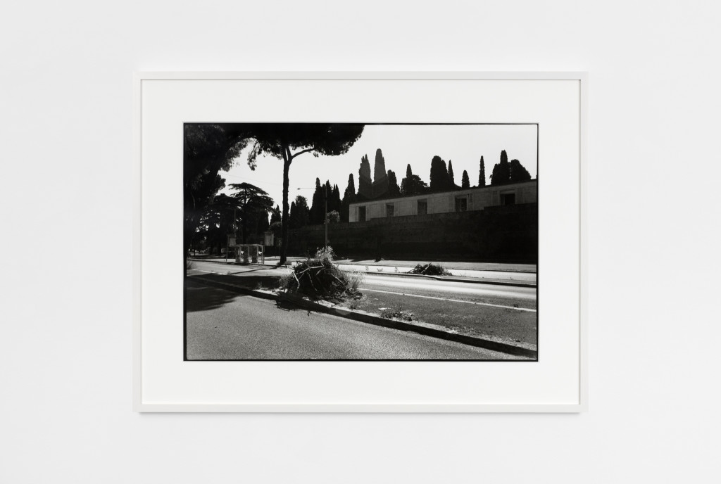 Ceppo Sradicato (series of black and white photographs)